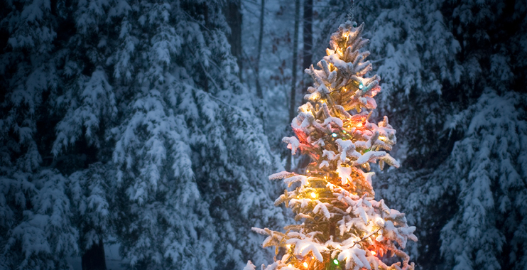 Christmas Tree   Serenity Massage + Wellness Spa